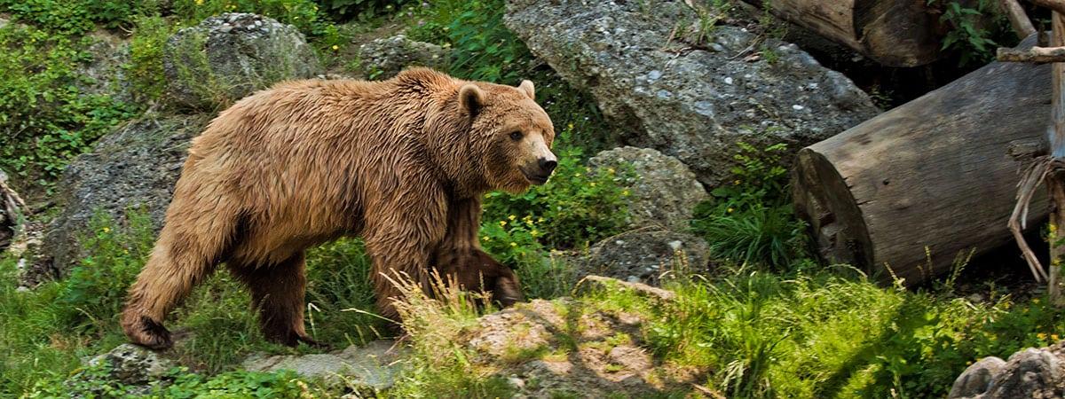 Tierparks –Tagesausflüge in Ihrem Sommerurlaub und Winterurlaub in Altenmarkt im Pongau, Salzburger Land